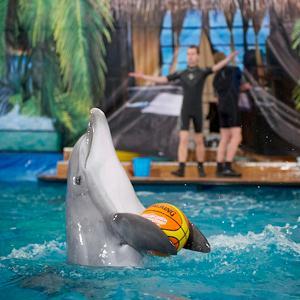 Дельфинарии, океанариумы Туапсе