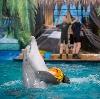 Дельфинарии, океанариумы в Туапсе