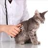 Ветеринарные клиники в Туапсе